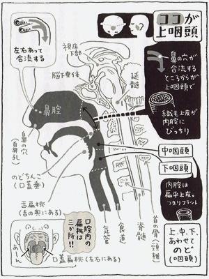 病気が治る鼻うがい健康法上咽頭図1711