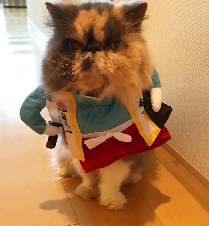 kitty侍