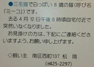 cat_9385_2.jpg