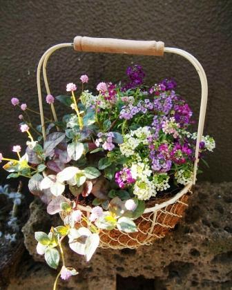 2ハミングさんお花