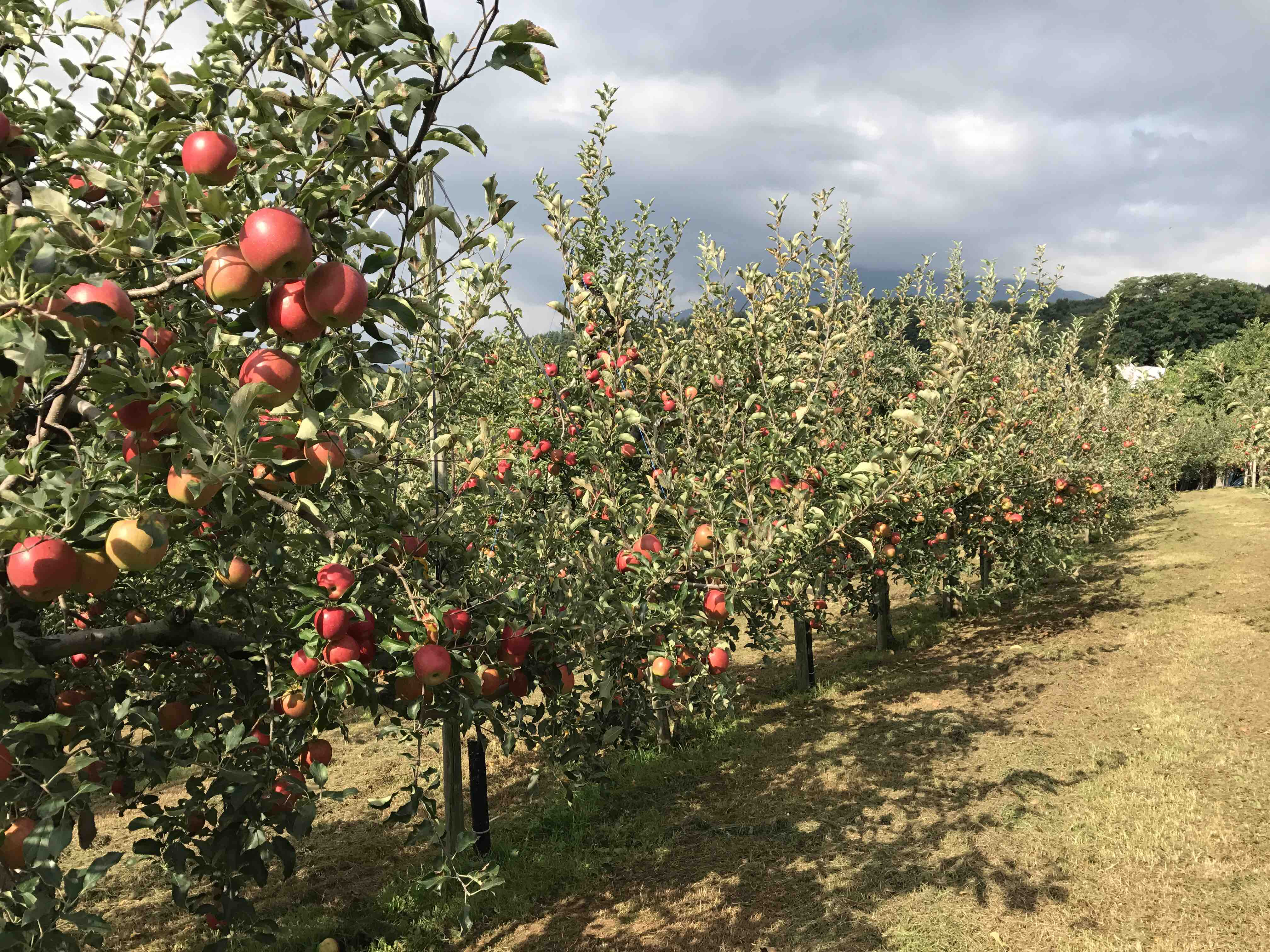 まさひろ林檎園農業日記