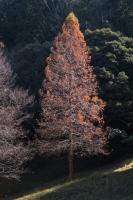 BL171217矢田丘陵2-5IMG_5159