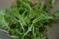 BL180107畑の菜っ葉2IMG_0081