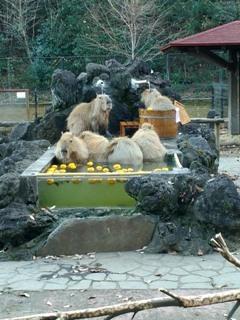 ブログ2 1218動物 (3)