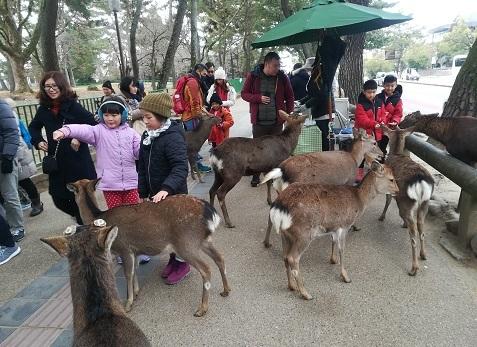 3 奈良公園の鹿