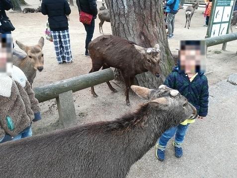 4 鹿がちょっと怖い