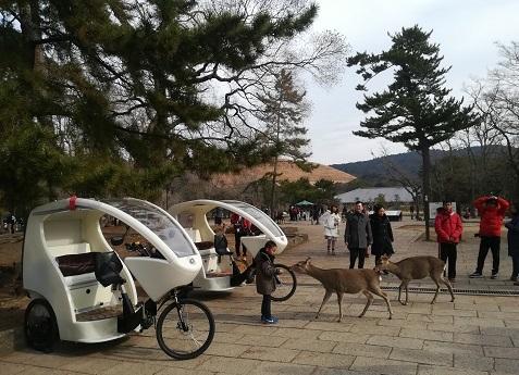 10 奈良公園