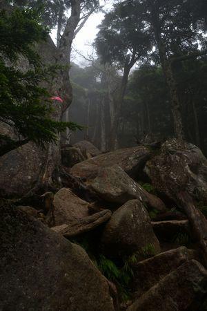 『42_201708130759登山道』