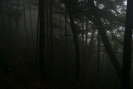 『71_201708131013登山道01』
