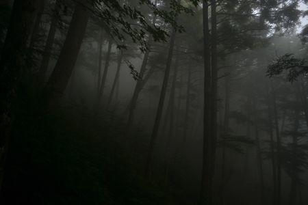 『73_201708131013登山道03』