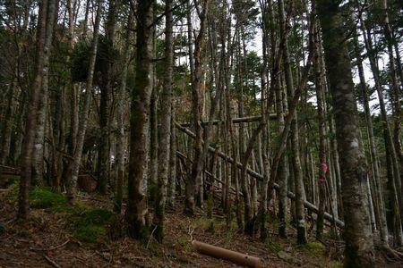 『08_10071513テント周辺の森』
