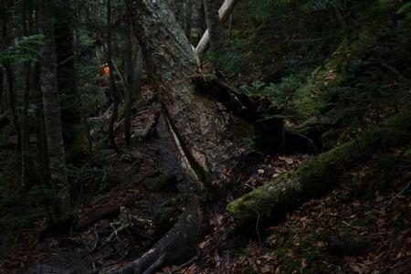 『56_10081104暗い森』