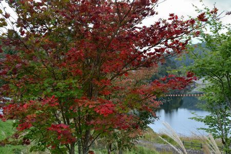 『67_10081417湖畔の紅葉』