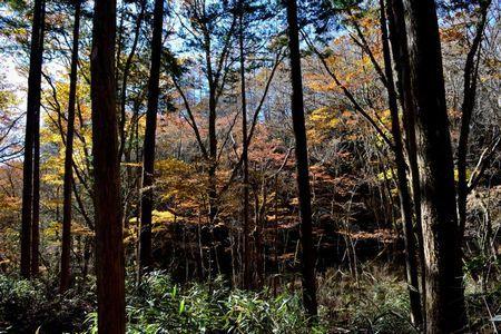 『030940_028登山道の紅葉』