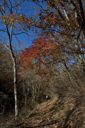 『031015_064登山道の紅葉』