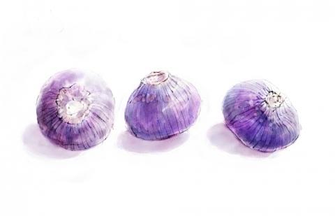 小さな紫玉ねぎ
