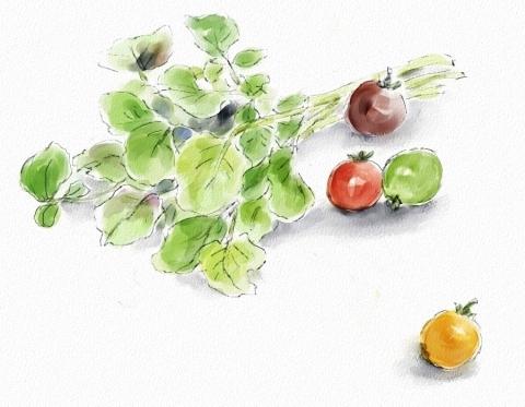 クレソンとミニトマト