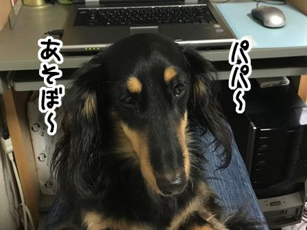 20171013d-1_20171013211601ee9.jpg