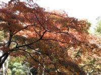 20181125殿ヶ谷戸庭園09