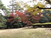 20181125殿ヶ谷戸庭園20