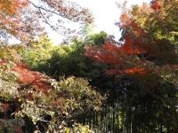 20181125殿ヶ谷戸庭園13