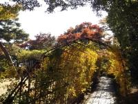 20181125殿ヶ谷戸庭園18