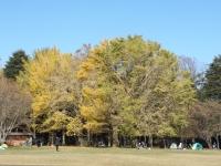 20181125小金井公園02