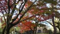 20181204山本有三記念館12