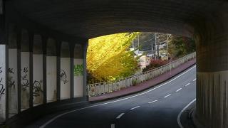 20161112ユーシン渓谷173
