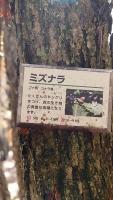 20161120御胎内清宏園184