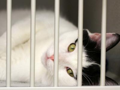 猫 檻 自由