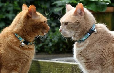争い にらみ合い 猫 ナワバリ