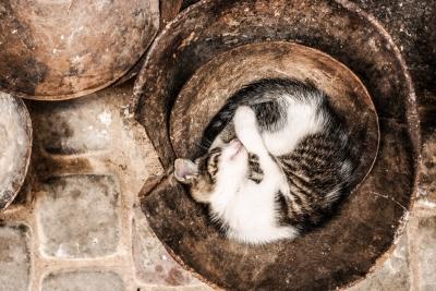 静かに寝かせる 猫