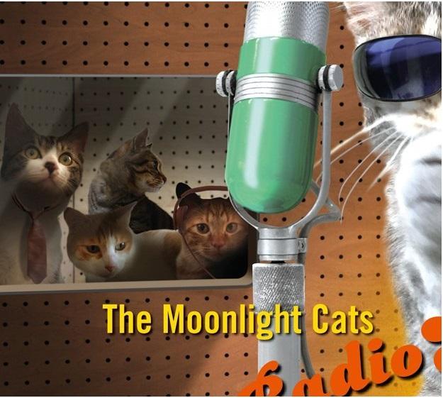 浜田省吾 The Moonlight Cats Radio Show Vol.1のジャケットでコントロールルームには石田ゆり子さんが飼っているハニタビが サムネイル画像