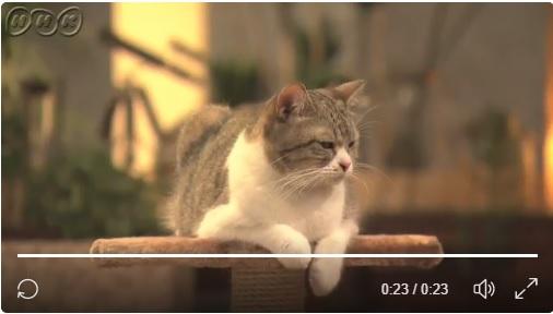 女優猫「にぼし」 さんの演技に脱帽