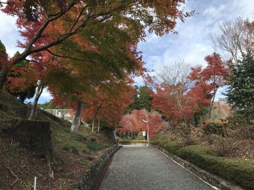 2017高蔵寺:三重塔・2