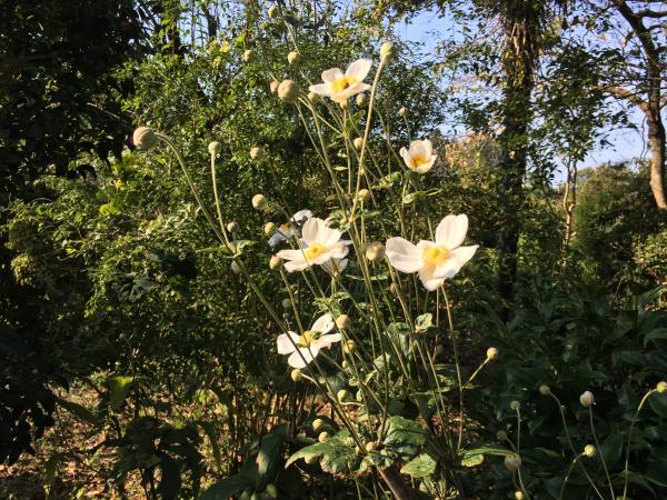 171028 実家の花3