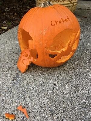 かぼちゃかじられた