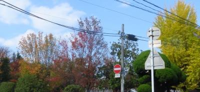 打越公園の紅葉