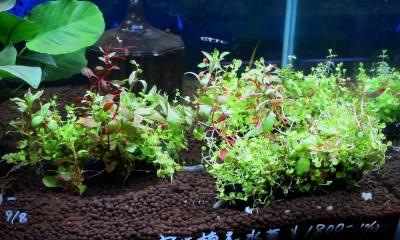 寄せ植え水草 俵型