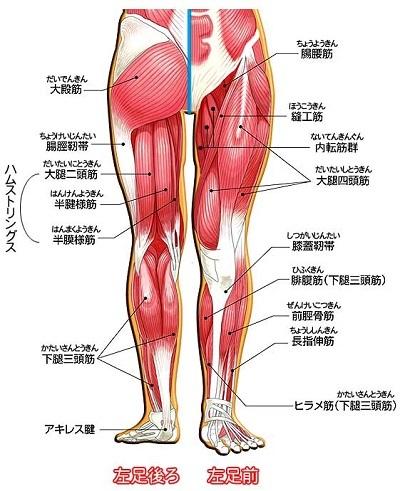腰から下の筋肉の名称