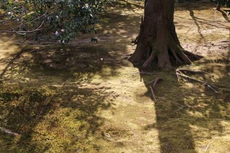 広隆寺の庭