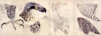花鳥img011 (3)