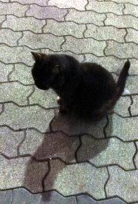 サビ猫に会う