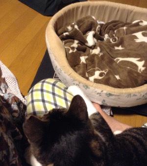 猫ベッドとお膝と
