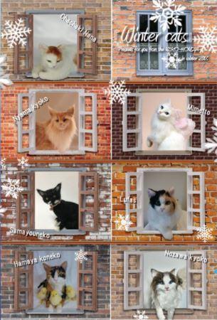 Winter Cats展by東京羊毛本社