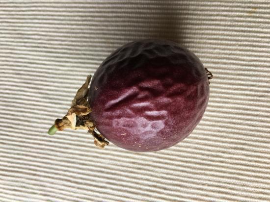 パッションフルーツ追熟①