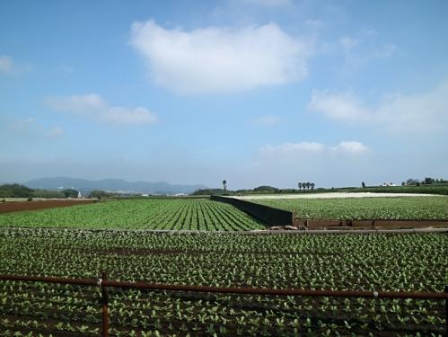 IMG_1522 大根畑
