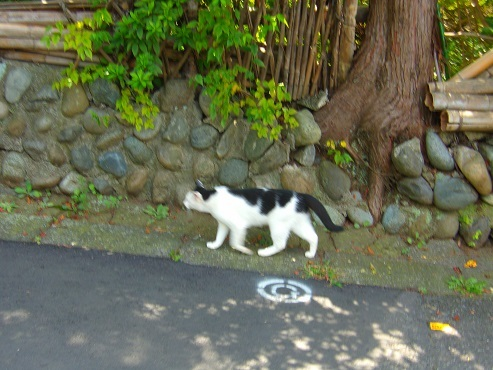 通りすがりに見かけた猫(770)