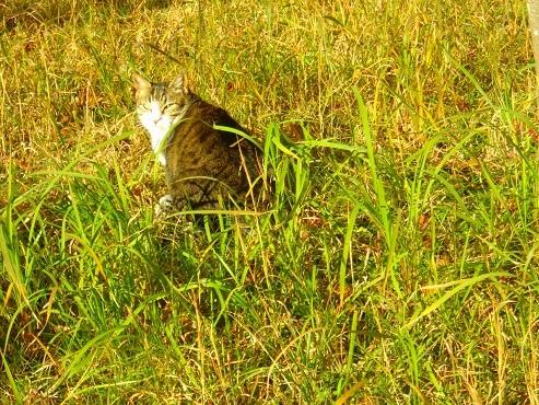 通りすがりに見かけた猫(771)
